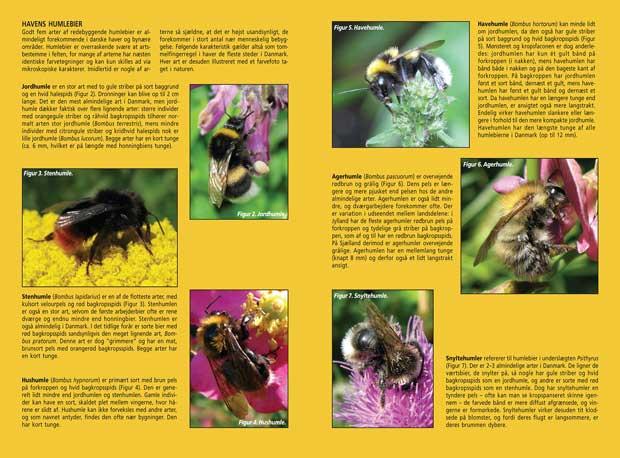 Hjælp humlebierne i haven