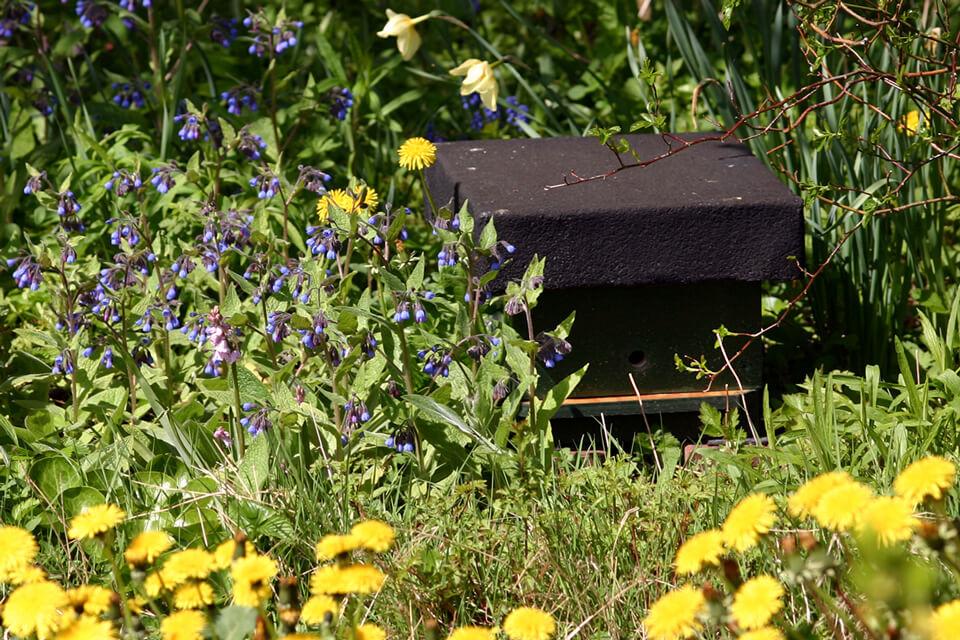 En kasse til humlebier i haven. Foto: © Maria Gram / Vildebier.dk