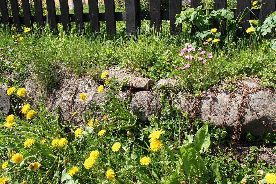 Der er gode forhold til smådyr i stensætninger, -diger og havemure. Foto: © Maria Gram / Vildebier.dk
