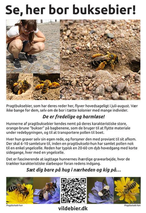 Et gratis skilt om buksebier til offentligt tilgængelige arealer. Fotos © Maria Gram / Vildebier.dk