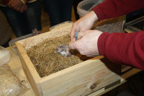 Indretning af en humlebikasse, foto © Maria Gram /vildebier.dk