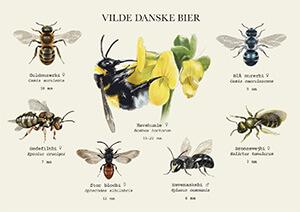 Postkort med udvalgte danske bier © Catherine Descure